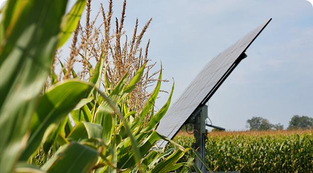 Photo of solar tracker in corn field
